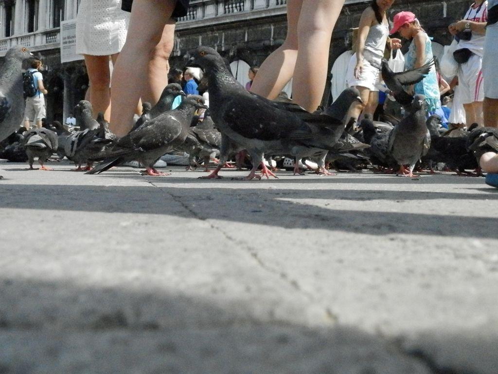 Vue par les yeux d'un pigeon